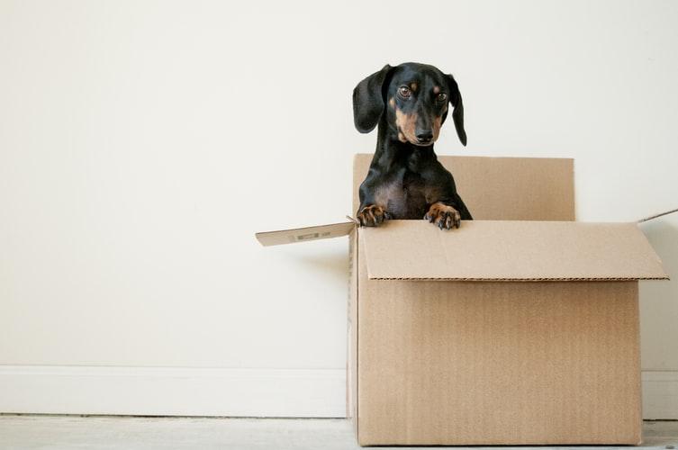 איך לחשוב מחוץ לקופסא בעסקים ובחיים (חשיבה יצירתית)