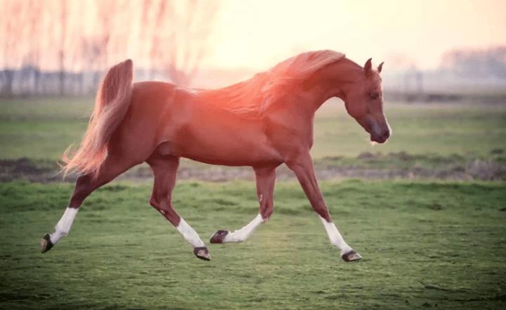 תחביב רק לעשירים בלבד? הסוס הכי יקר בעולם